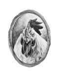 Portrait de coq Image stock
