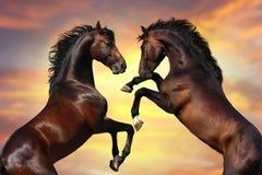 Portrait de deux chevaux contre le beau ciel Images libres de droits