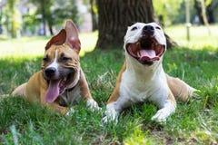 Portrait de deux chiens heureux en parc Photos stock