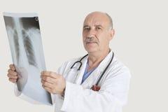 Portrait de docteur supérieur tenant la radiographie médicale au-dessus du fond gris Photo stock
