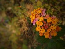 Portrait de fleur photographie stock libre de droits