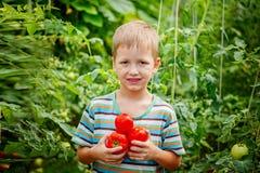 Portrait de garçon heureux tenant les tomates mûres photos libres de droits