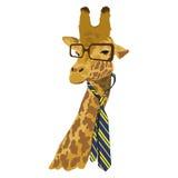 Portrait de girafe dans les verres et le lien à la mode Photo libre de droits