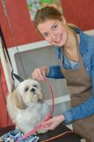 Portrait de groomer d'animal familier image stock
