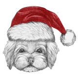 Portrait de Havanese avec Santa Hat Illustration Stock
