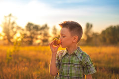 Portrait de jeune garçon mangeant la pêche Enfant heureux dans le jour d'été du soleil Enfant avec le fruit à l'arrière-plan de n Photographie stock libre de droits