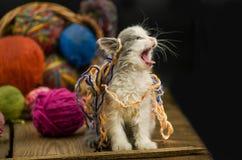 Portrait de joli chaton gris mignon Chaton drôle et tricotage Images stock