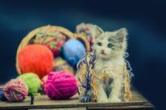 Portrait de joli chaton gris mignon Chaton drôle et tricotage dans le panier en osier Photos libres de droits