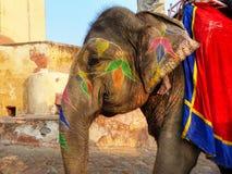 Portrait de l'éléphant peint marchant à Amber Fort près de Jaipu Photos libres de droits