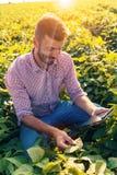 Portrait de la position de jeune exploitant agricole dans le domaine de soja images stock