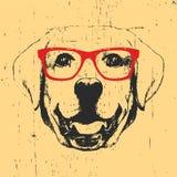 Portrait de Labrador avec des verres illustration de vecteur