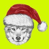 Portrait de loup avec Santa Hat Photographie stock libre de droits