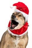 Portrait de Noël de chienchien Photo libre de droits