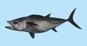Portrait de pêche de thon de pied-de-poule Images libres de droits