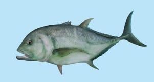 Portrait de pêche de Trevally de géant du GT Photos libres de droits