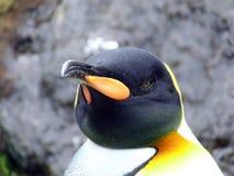 Portrait de paysage de pingouin d'empereur Photographie stock libre de droits