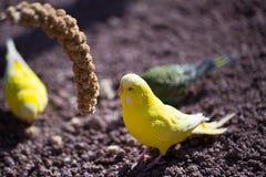 Portrait de perroquet d'oiseau Scène de faune de nature tropicale Photo libre de droits