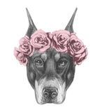 Portrait de Pinscher de dobermann avec la guirlande principale florale Photographie stock libre de droits