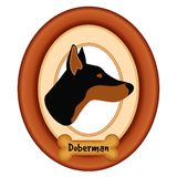 Portrait de Pinscher de dobermann, cadre en bois, festin d'os de chien Photos stock