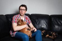 Portrait de plan rapproché, jeune homme dans la chemise rouge, se reposant sur le divan en cuir noir avec deux chiens, TV de obse photos libres de droits