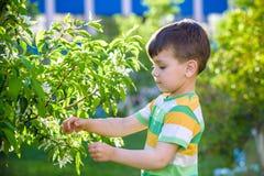 Portrait de plan rapproch? de petit enfant parmi des branches d'arbre de floraison de ressort Jeux actifs de jeux d'enfant dehors image libre de droits