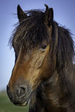 Portrait de poney Photographie stock libre de droits