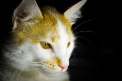 Portrait de profil de chat tigré photographie stock