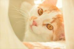 Portrait de profil de chat tigré images stock