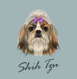Portrait de Shih Tzu Dog Illustration de vecteur Photo libre de droits