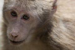 Portrait de singe Images libres de droits
