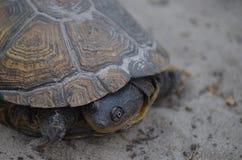 Portrait de tortue de léopard Photo libre de droits