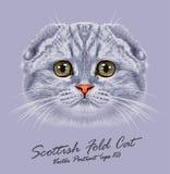 Portrait de vecteur de chat de pli d'écossais illustration libre de droits