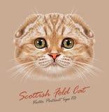Portrait de vecteur de chat de pli d'écossais illustration de vecteur
