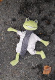 Portrait of a dead Frog Stock Photography