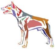 Portrait debout décoratif coloré de Pinscher miniature de chien Photo libre de droits