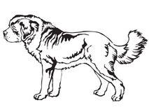 Portrait debout décoratif d'illustra de vecteur de St Bernard Dog Illustration Stock