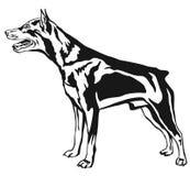 Portrait debout décoratif du vecteur IL de Pinscher miniature de chien Image stock