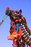 Portrait of decorated camel at Desert Festival, Jaisalmer, India Stock Photos