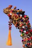 Portrait of decorated camel at Desert Festival, Jaisalmer, India Stock Image