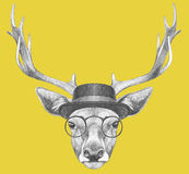 Portrait of Deer with glasses and hat. Stock Photos