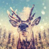 Portrait of a deer. With snowflakes Stock Photography