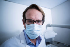 Portrait of dentist wearing surgical mask Royalty Free Stock Images