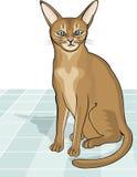 Portrait der abyssinischen Katze Stockfotos