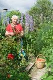 Portrait der Großmutter im Garten Lizenzfreies Stockfoto