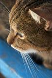Portrait der Katze Lizenzfreie Stockfotos