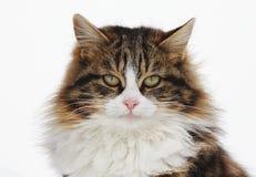 Portrait der Katze Stockfoto