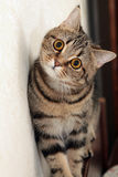 Portrait der Katze Stockbild