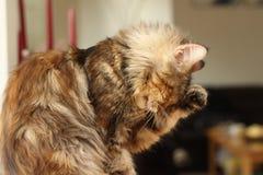 Portrait der Katze Stockfotos