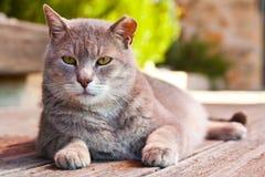 Portrait der Katze auf dem Fußboden Stockfotografie