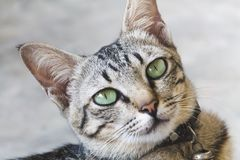 Portrait der netten Katze stockfotos